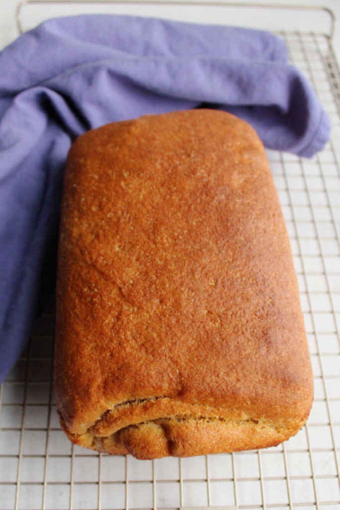 golden brown loaf of freshly baked sourdough wheat sandwich bread