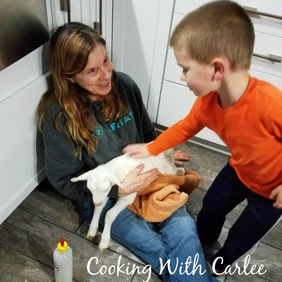 Little Dude and MiMi petting lamb.