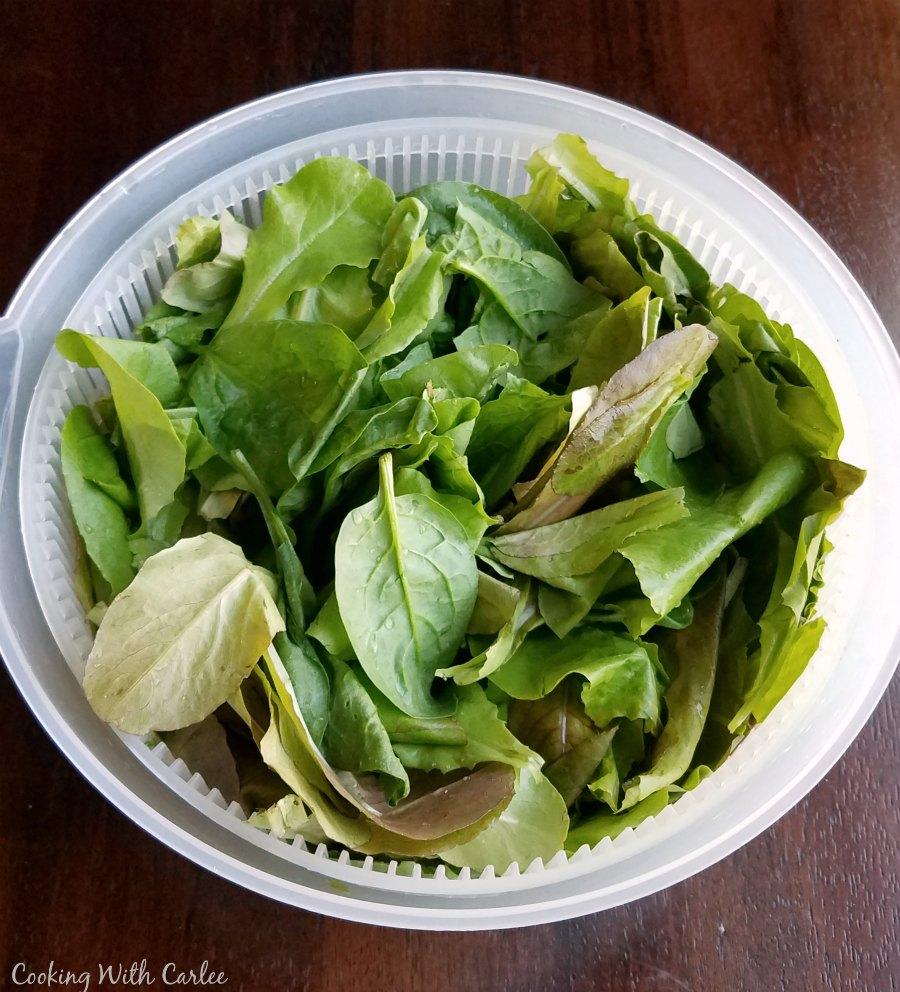 leaf lettuce in salad spinner.