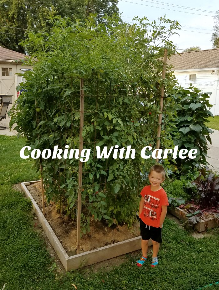 Little Dude standing next to super tall tomato plants.