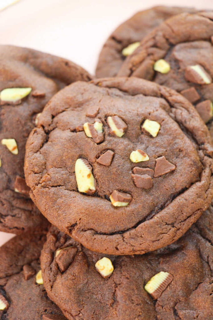 chocolate cookie with mint chocolate chips on top.