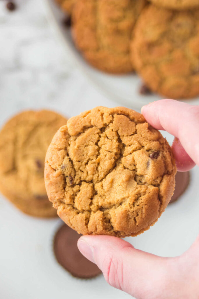 Hand holding chewy peanut butter cookies with chocolate chips.